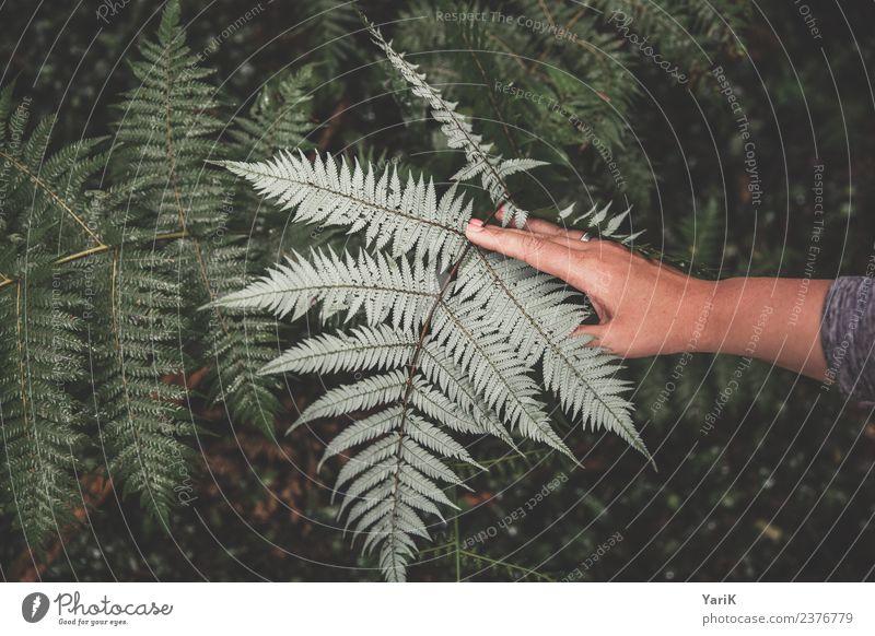 iconic Silver Fern Natur Pflanze Sommer Schönes Wetter Gras Sträucher Blatt Grünpflanze Wildpflanze Wald Urwald silber Neuseeland Waldboden Hand grün Logo