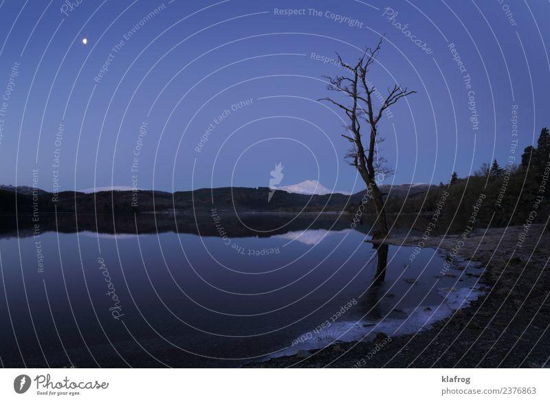 Stille Nacht - eisige Nacht Natur Landschaft Urelemente Luft Wasser Himmel Wolkenloser Himmel Nachthimmel Mond Winter Schnee Baum Hügel Berge u. Gebirge