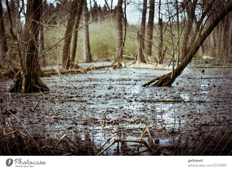Wald unter Wasser Natur Baum Pflanze Umwelt dunkel Landschaft Regen braun Erde wild nass natürlich Sträucher Urelemente