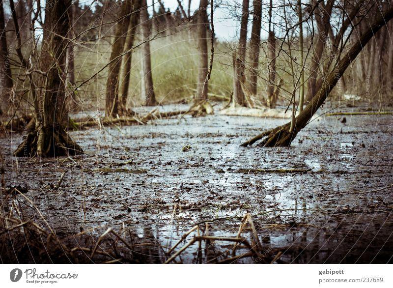 Wald unter Wasser Umwelt Natur Landschaft Pflanze Urelemente Erde Klimawandel Unwetter Regen Baum Sträucher Urwald Moor Sumpf Flußauen Auwald Überschwemmung