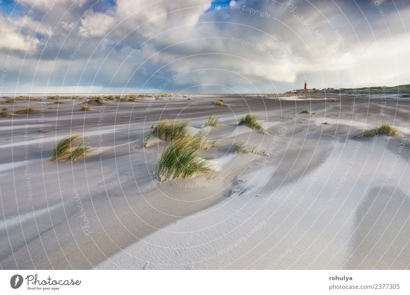 windiger stürmischer Tag an der Nordseeküste, Texel, Holland schön Ferien & Urlaub & Reisen Strand Natur Landschaft Sand Himmel Wolken Horizont Wetter