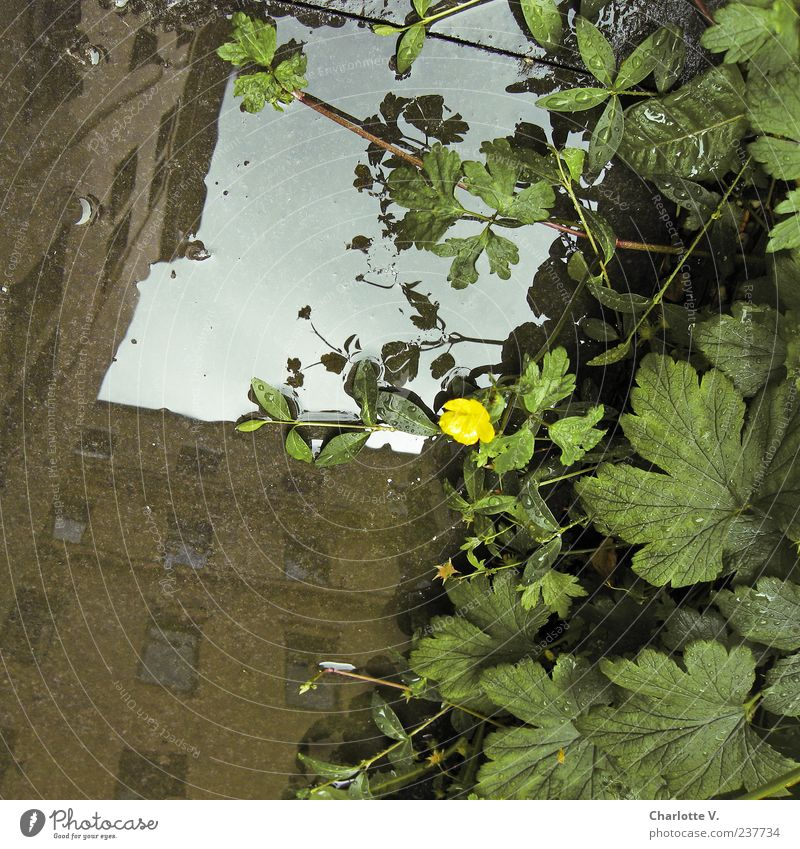 Häuser-Spiegelung Pflanze Wasser Wassertropfen Sommer Wildpflanze Haus Gebäude Wohnhaus Mauer Wand Fassade außergewöhnlich Flüssigkeit blau braun gelb grün