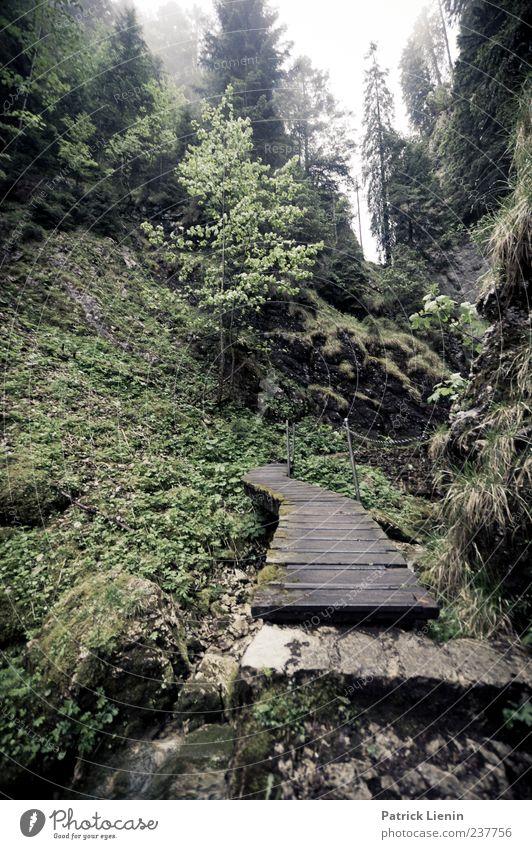 Poëta Raisse Ferien & Urlaub & Reisen Ausflug Freiheit Umwelt Natur schlechtes Wetter Nebel Regen Baum Wald Schlucht Brücke Stein Holz grün Beginn entdecken