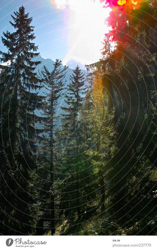 Sommerlicht Wolkenloser Himmel Sonne Schönes Wetter Baum Fichtenwald Wald Alpen Berge u. Gebirge Kalkalpen Karwendelgebirge Erholung leuchten Wärme Einsamkeit