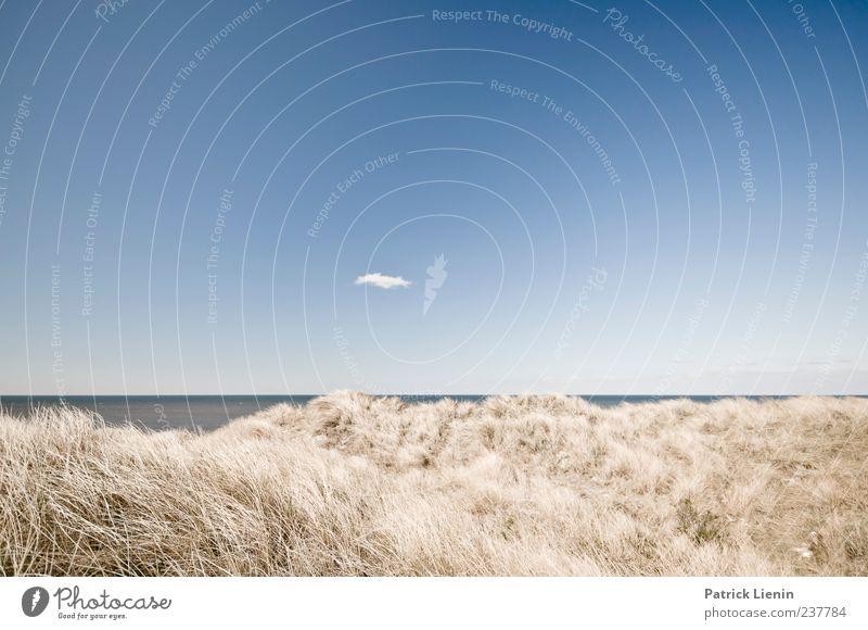 Just before we met Himmel Natur blau schön Ferien & Urlaub & Reisen Pflanze Meer Strand Wolken Ferne Umwelt Landschaft Küste Freiheit Sand träumen