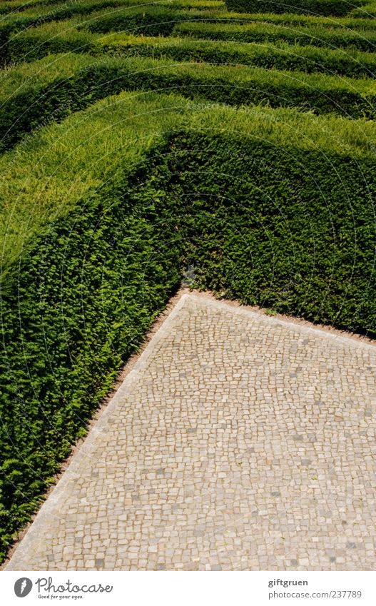 no way out Natur Pflanze Sträucher Blatt Grünpflanze außergewöhnlich grün komplex Kontrolle Verzweiflung Hecke Irrgarten Labyrinth Gartenbau