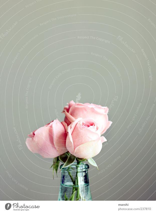 Trio grün schön Pflanze Blume grau rosa 3 Dekoration & Verzierung Rose Blumenstrauß Gefäße Vase Rosenblätter Anlass