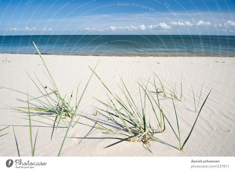 Spiekeroog ??? Natur blau weiß Ferien & Urlaub & Reisen Meer Sommer Strand ruhig Ferne Landschaft Küste Freiheit Sand Horizont Wellen Klima
