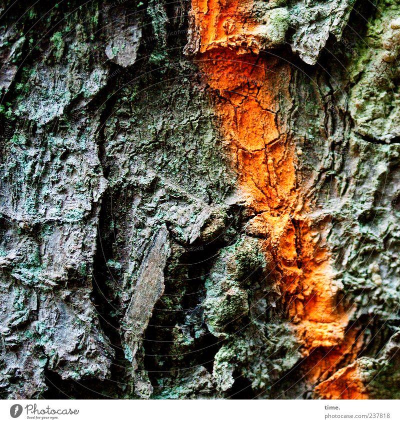Mein Freund, der Baum Natur grün Baum Pflanze Umwelt Holz orange außergewöhnlich natürlich Schilder & Markierungen Wachstum einzigartig Vergänglichkeit Zeichen trocken Baumstamm