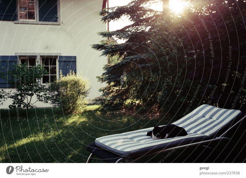 Zeit für mich Sonnenlicht Sommer Baum Gras Sträucher Garten Haus Einfamilienhaus Fassade Fenster Tier Haustier Katze 1 Liegestuhl genießen liegen schlafen