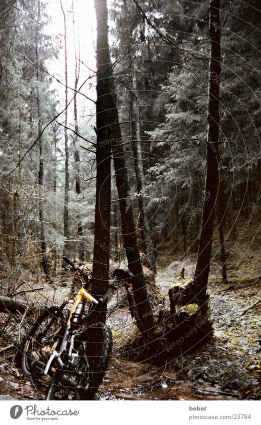 Der Bock im Wald (II) Mountainbike Fahrrad Blatt Holz Baumrinde transpirieren Ausdauer Suspension Verkehr Scheibenbremsen Uphill Downhill X-trial Gelände