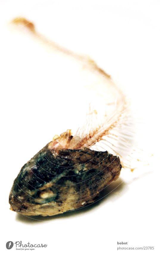 Rückgrat zeigen Skelett Fischgräte Fischereiwirtschaft Kieme Ernährung skelettiert Schwimmhilfe Scheune Auge Forellem