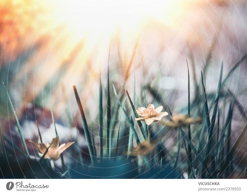 Sommer wilde Natur mit Gras, Blumen und Sonnenstrahlen Design Garten Pflanze Sonnenaufgang Sonnenuntergang Frühling Schönes Wetter Blatt Blüte Park Wiese Feld