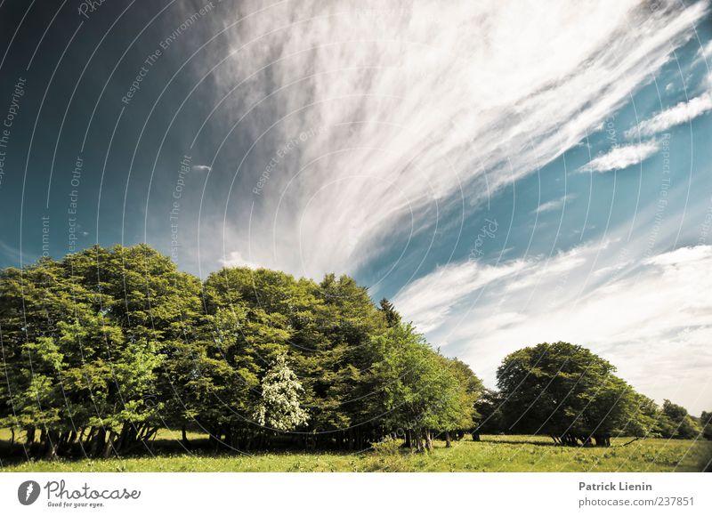 Goodbye Blue Sky Himmel Natur blau weiß Ferien & Urlaub & Reisen Baum Pflanze Sommer Wolken Einsamkeit Wald Ferne Umwelt Landschaft Wiese Leben