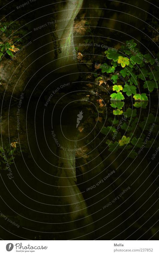 Geheim Umwelt Natur Pflanze Baum Blatt Baumstamm Seeufer Teich Wasser Wachstum dunkel natürlich Stimmung ruhig geheimnisvoll Farbfoto Außenaufnahme Menschenleer
