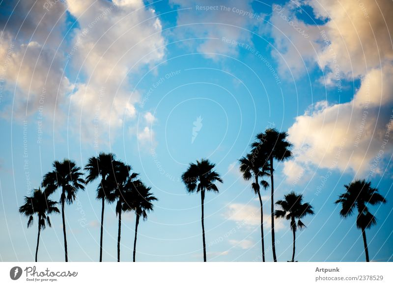 Palmensilhouette Silhouette Himmel Wolken Sommer Urlaub Schatten im Freien Bäume reisen Ausflug tropisch Natur Insel Horizont Sonnenuntergang