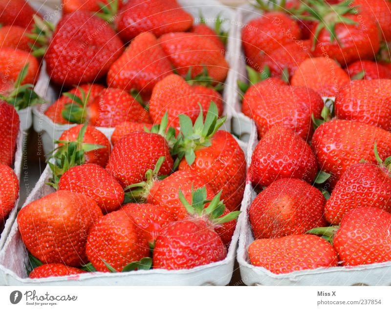 Erdbeerfeld rot Ernährung Lebensmittel Gesundheit Frucht frisch süß lecker Bioprodukte saftig Schalen & Schüsseln Erdbeeren Geschmackssinn knackig Marktstand