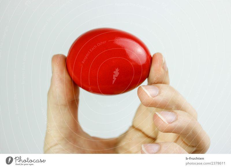 Rotes Hühnerei Lebensmittel Frühstück Mann Erwachsene Hand Finger berühren festhalten rund rot Ei Osterei Ostern Osternest Fortpflanzung Landei Innenaufnahme