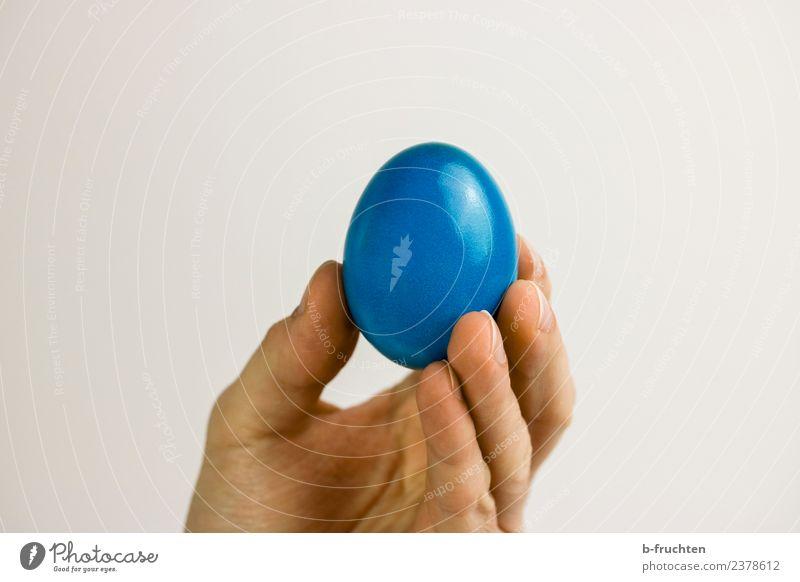 Blaues Hühnerei Lebensmittel Ernährung Mann Erwachsene Hand Finger festhalten blau Ei Osterei Ostern fruchtbar zeigen rund Innenaufnahme Studioaufnahme