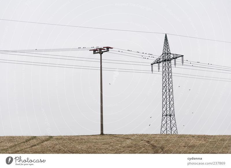 Strom I Himmel Natur ruhig Einsamkeit Umwelt Landschaft Wiese Gras Wege & Pfade Freiheit Vogel Feld Energiewirtschaft ästhetisch Elektrizität Zukunft