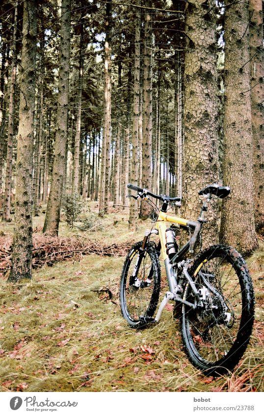 Der Bock im Wald (I) Mountainbike Fahrrad Blatt Holz Baumrinde transpirieren Ausdauer Suspension Verkehr Scheibenbremsen Uphill Downhill X-trial Gelände Sport