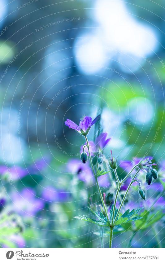 Fasziniert Natur Pflanze Sonnenlicht Sommer Schönes Wetter Blume Blatt Blüte Park Wiese Feld ästhetisch Duft authentisch einfach frisch Zusammensein schön weich