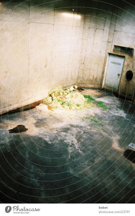 Elefanten Verlies Ernährung Einsamkeit Tier dreckig Architektur Beton trist Zoo Futter Wildnis Sachsen Zwinger