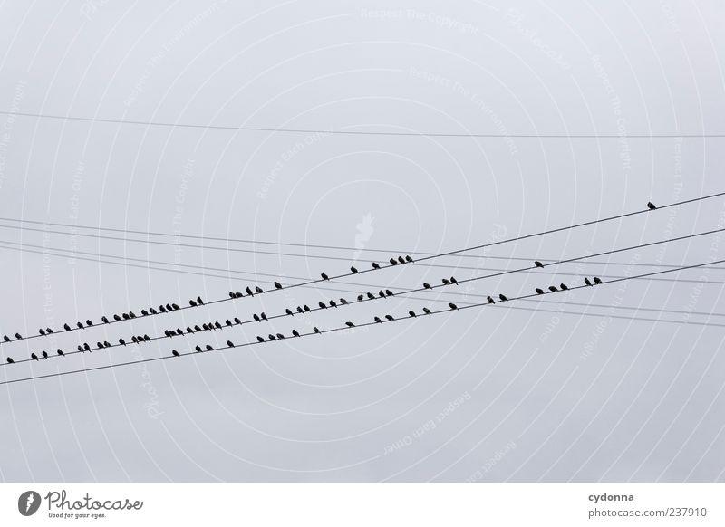 Die Vögel Natur Himmel ruhig Wolken Freiheit Vogel Umwelt sitzen ästhetisch Elektrizität Netzwerk mehrere einzigartig Gelassenheit viele Hochspannungsleitung