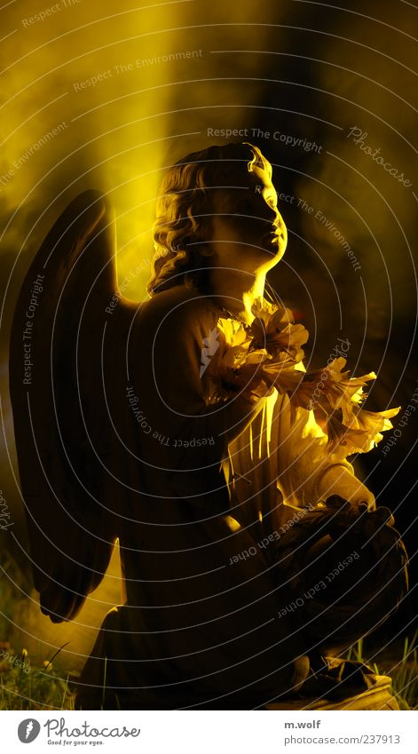 Licht ruhig gelb Tod träumen Traurigkeit Religion & Glaube Hoffnung Trauer Engel Ende Vergänglichkeit Zeichen Skulptur Figur Ewigkeit