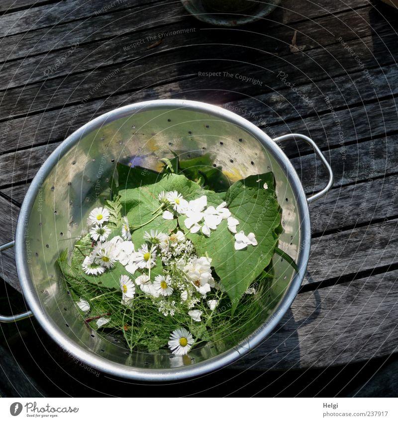 aus der Kräuterküche... weiß Blume grün Pflanze Blatt Ernährung Blüte Gesundheit Lebensmittel einzigartig außergewöhnlich Kräuter & Gewürze Gemüse silber Diät