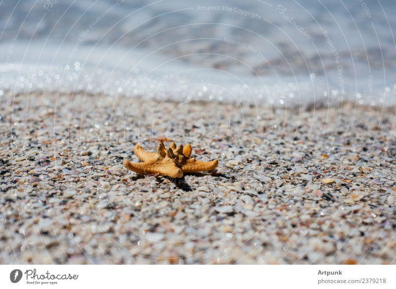 Ein Seestern auf dem Sand Tier Küste Sommer Meer Brandung Wasser Ferien & Urlaub & Reisen Meeresschaum Wellen Meeresstimmung tropisch