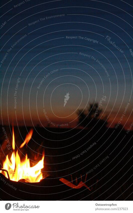 am liebsten heute Abend Himmel Natur blau Baum Pflanze rot schwarz Landschaft gelb Glück Luft Horizont Zufriedenheit Feuer leuchten Warmherzigkeit