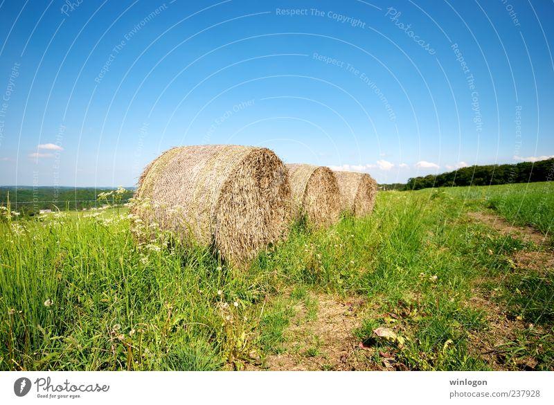 Himmel Pflanze Umwelt Landschaft Kunst Arbeit & Erwerbstätigkeit Feld Horizont Design Getreide Landwirtschaft Ernte Schönes Wetter Wirtschaft Tradition