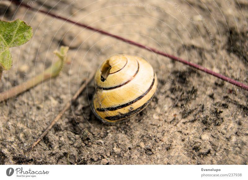 Freistehend - Zu vermieten Natur Pflanze Sommer Blatt Tier Einsamkeit Umwelt Gras Garten Erde Wildtier Häusliches Leben Sträucher Urelemente Schönes Wetter