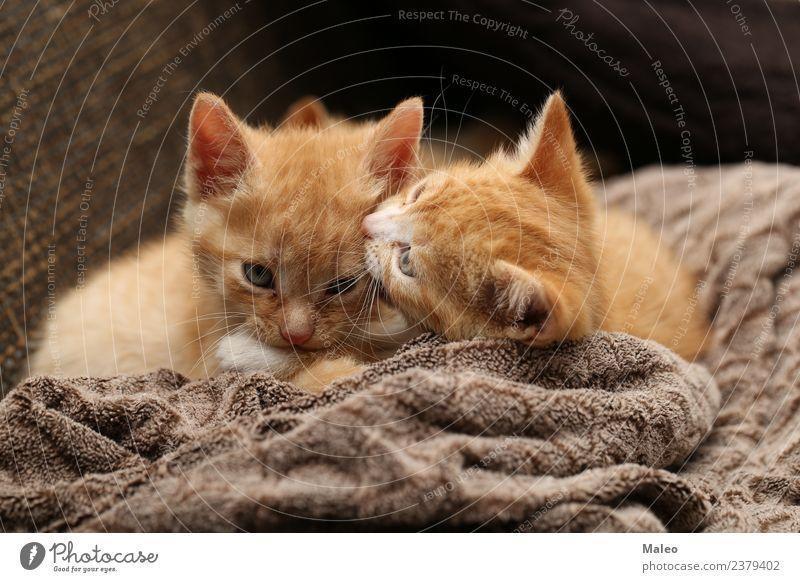 Kätzchen Katze schön rot Tier Tierjunges klein Spielen Haustier Hauskatze Säugetier rothaarig Katzenbaby Liebling Katzenauge Strichhaar