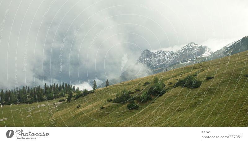 Wo sind die Kühe? Natur grün Sommer Landschaft ruhig Wolken Ferne Wald Berge u. Gebirge Wiese Wege & Pfade grau Wetter Schönes Wetter Alpen Schneebedeckte Gipfel