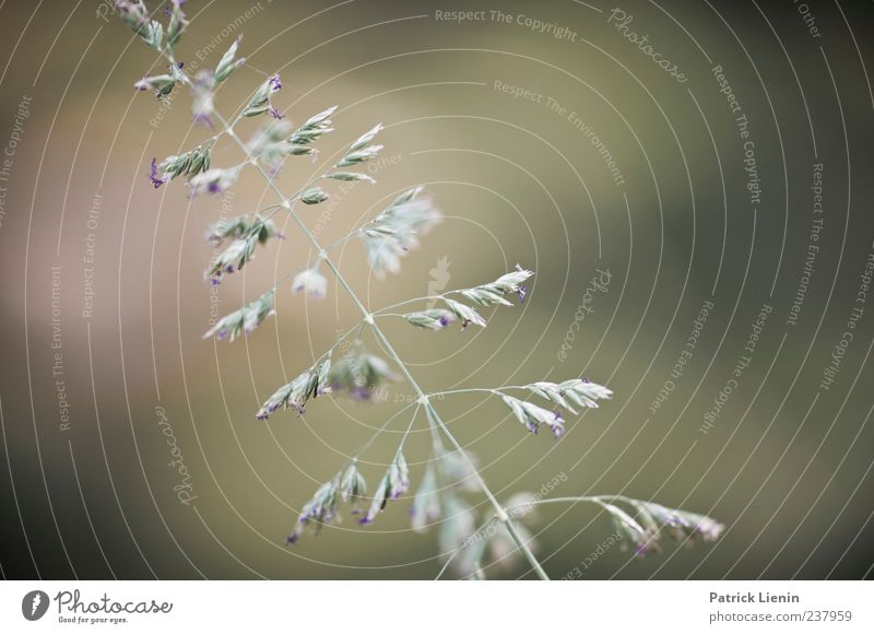 green grass Umwelt Natur Pflanze Frühling Gras Blatt Blüte Grünpflanze Wildpflanze grün ästhetisch elegant Grasspitze Farbfoto Außenaufnahme Nahaufnahme