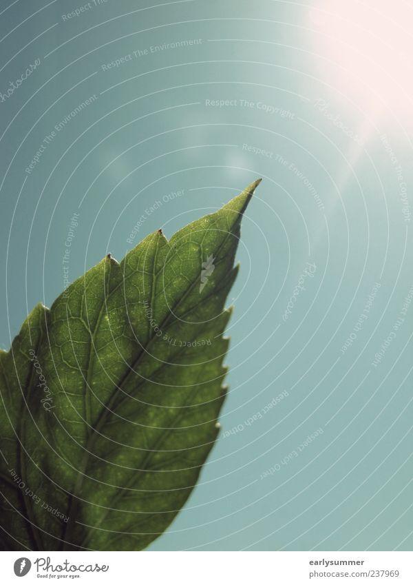 zum Licht hin Himmel Natur blau grün Baum Pflanze Sonne Sommer Blume Blatt Umwelt Wärme Frühling Garten Luft Wetter