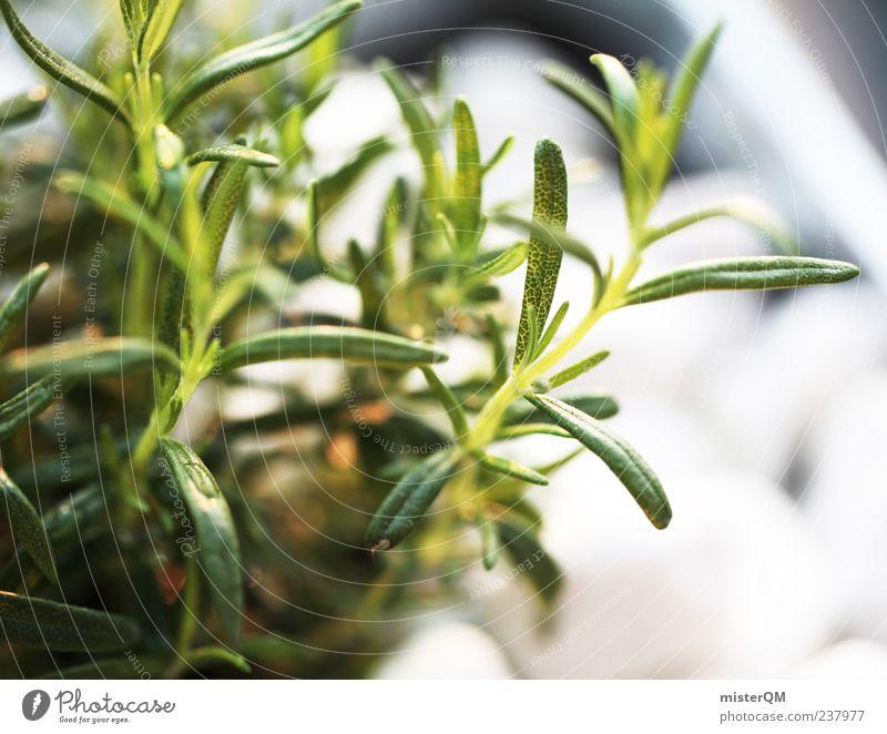 Küchenwürze. Umwelt Natur Pflanze Klima Rosmarin Kräuter & Gewürze Ernte eigen Dekoration & Verzierung nützlich Nutzpflanze grün ökologisch Gesundheit