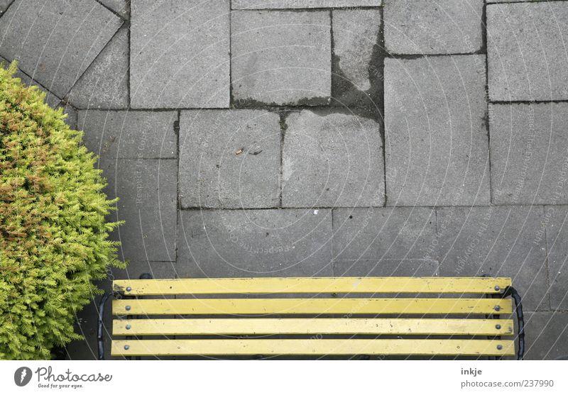 meine Welt steht kopf Sträucher Park Bank Parkbank Steinplatten Erholung Blick stehen außergewöhnlich hoch oben verrückt gelb grau grün Gefühle Stimmung Pause