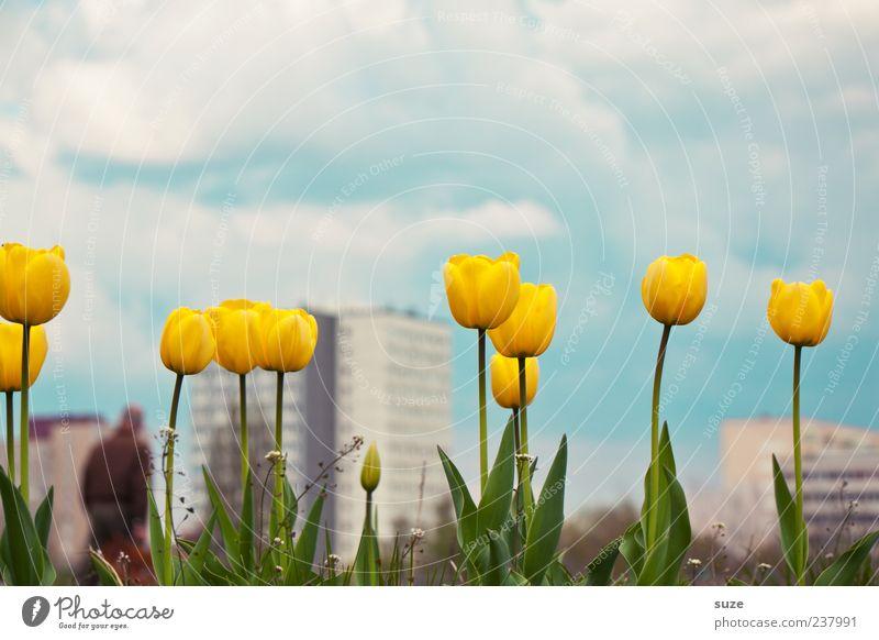Zweiter Frühling Himmel Natur blau Stadt schön Pflanze Sommer Blume Wolken Haus Umwelt Landschaft gelb Frühling Klima Hochhaus