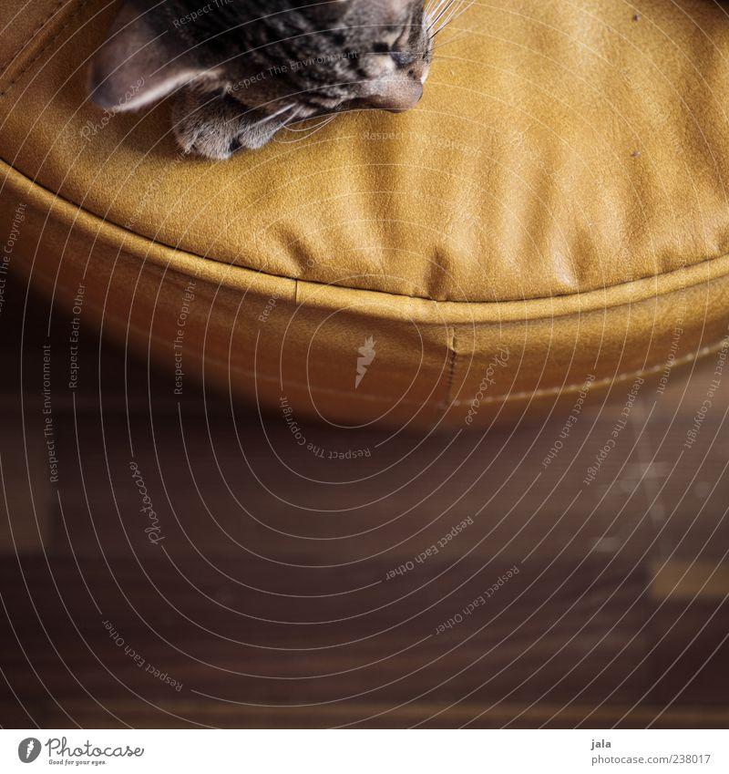 bisschen katze Katze Tier ruhig Erholung liegen schlafen Tiergesicht Müdigkeit Haustier Leder Holzfußboden Hocker