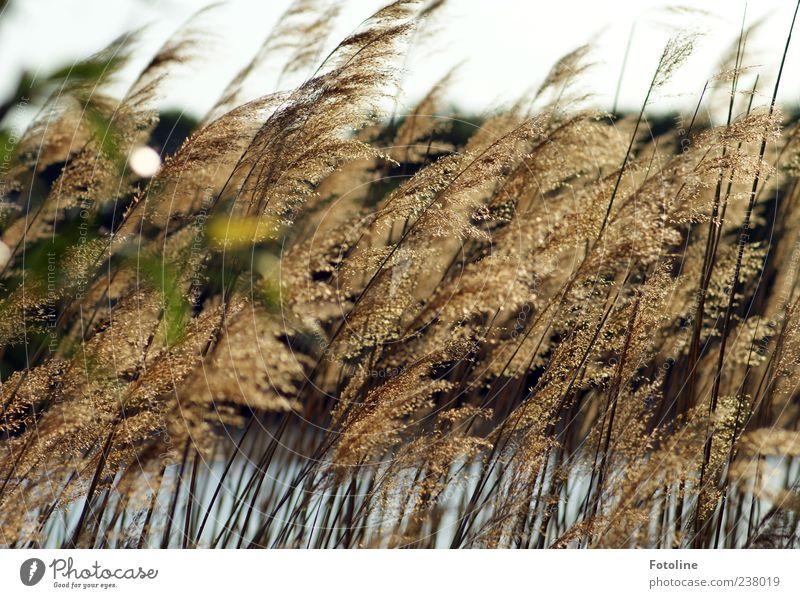 Am See Himmel Natur Wasser Pflanze Sommer Umwelt Landschaft Gras hell natürlich Urelemente nah Seeufer Schilfrohr Wolkenloser Himmel natürliche Farbe