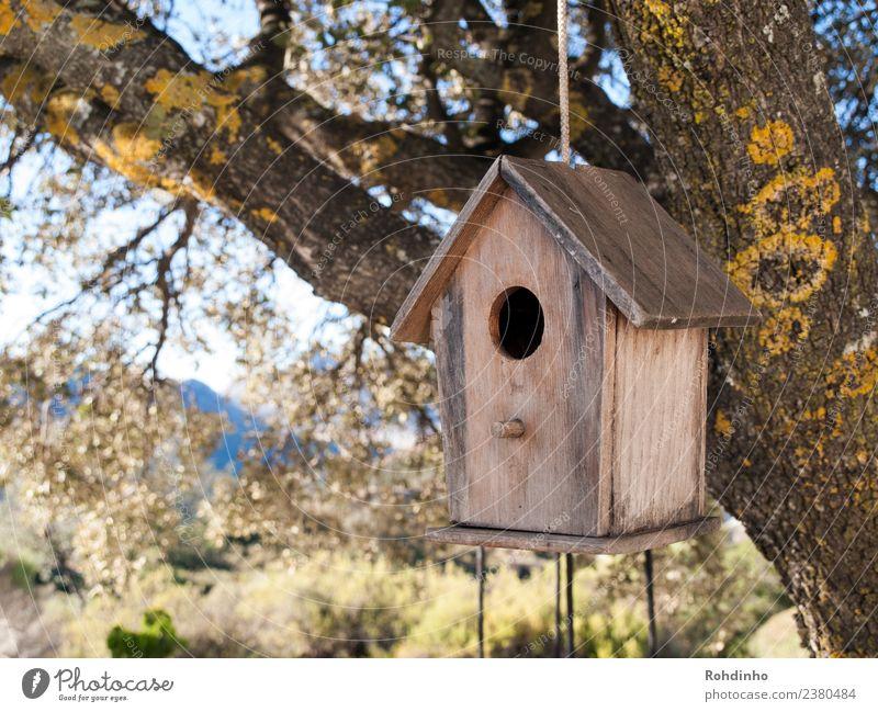 Vogelwohnung Baum Haus gelb Holz Garten braun Wohnung Seil Eiche flattern Futterhäuschen Traumhaus Nistkasten Baumhaus Nisthöhle
