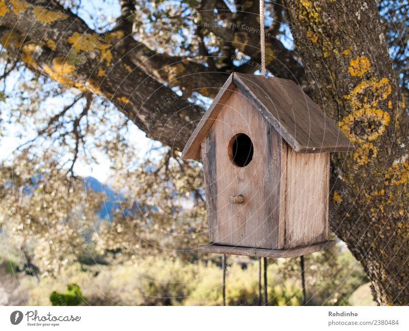 Vogelwohnung Wohnung Haus Garten Holz braun gelb Futterhäuschen Baumhaus Nistkasten Nisthöhle Traumhaus Eiche flattern Seil Farbfoto Außenaufnahme Menschenleer