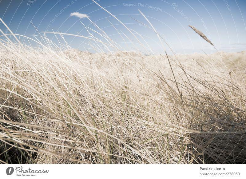 Träum ich schon Natur Ferien & Urlaub & Reisen Pflanze Umwelt Landschaft Küste Freiheit Luft Wetter Wind Freizeit & Hobby Ausflug Tourismus Sträucher Urelemente