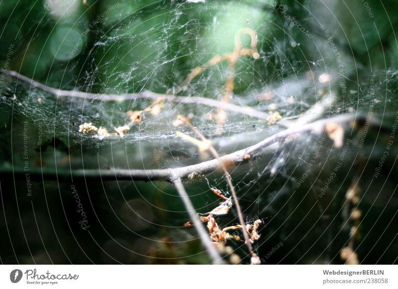 Märchenhaftes Spinnennetz Natur grün Pflanze Ast Tiefenschärfe vertrocknet