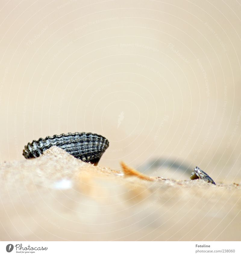 Spiekeroog | versteckte Schönheit Natur Sommer Strand Tier schwarz Umwelt Küste Sand hell Wildtier natürlich Urelemente Muschel Herzmuschel