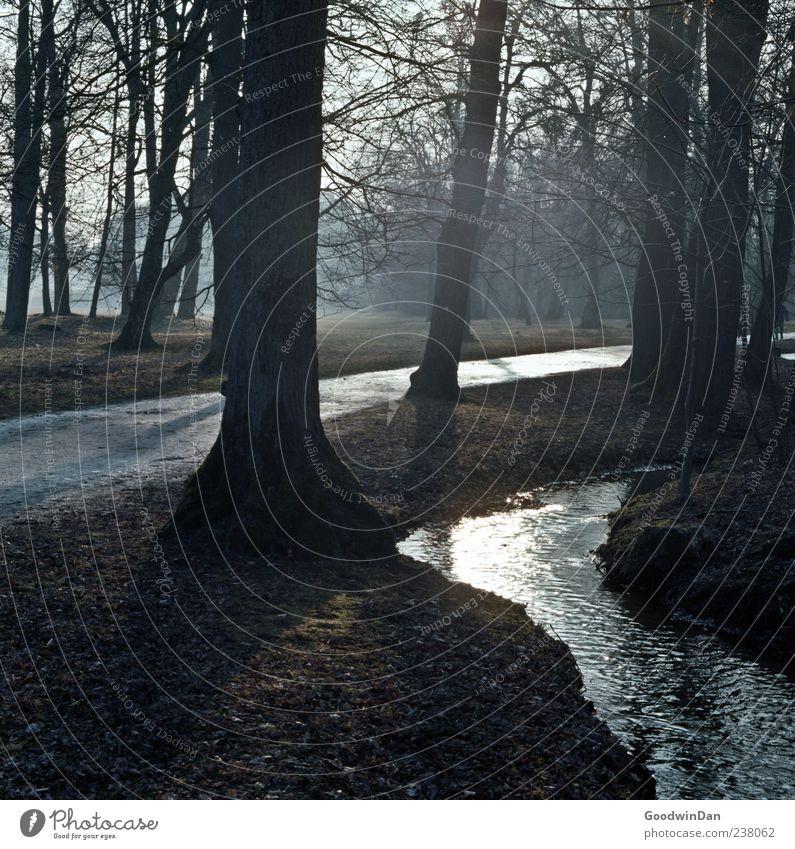durch den Nebel Natur Baum Umwelt dunkel kalt Gras Park Stimmung Erde Wetter authentisch Urelemente trist einfach Bach Sonnenstrahlen