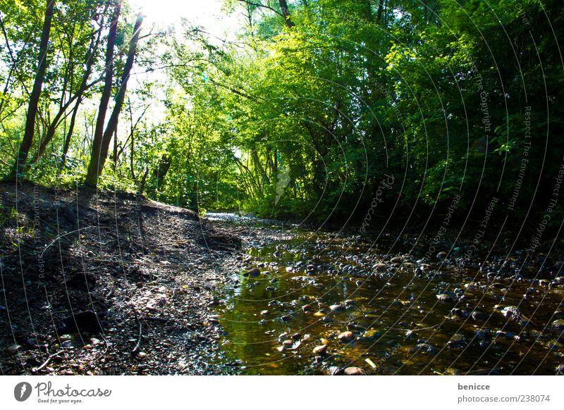 der Bach Wald Wasser Baum Licht grün Natur Menschenleer Stein Sonnenlicht Umwelt Blatt